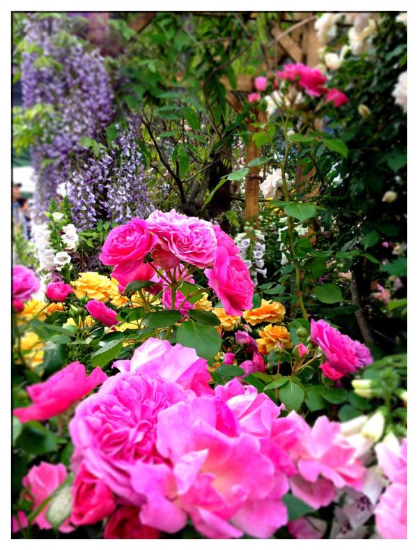 「キャス・キッドソンの秘密の庭」の一部