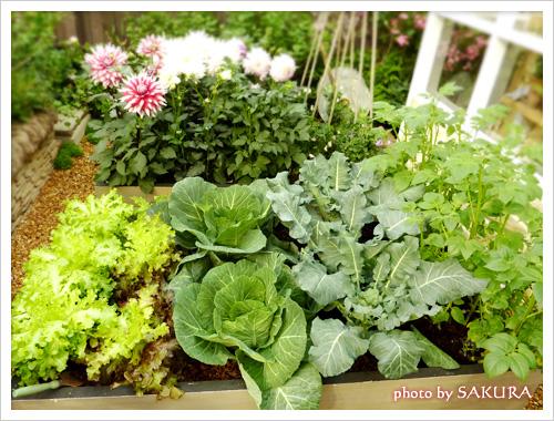 ガーデンには野菜もある