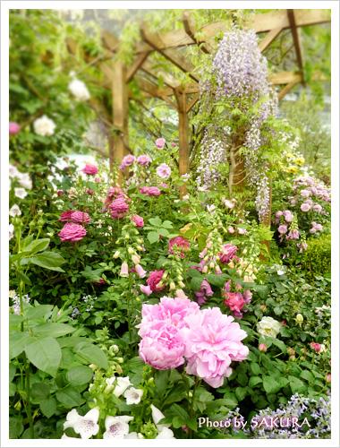 花でいっぱいの庭