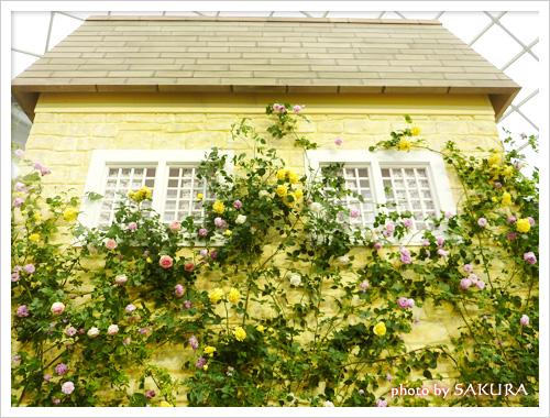 キャス・キッドソンさんの家?の壁には薔薇がつたっていてカワイイ