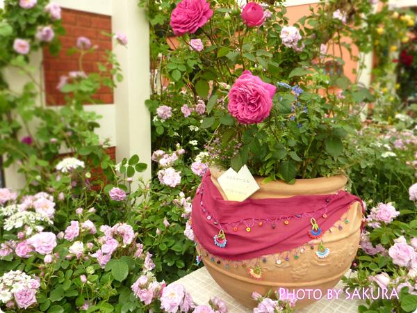 バラのふるさとトルコ「ターキッシュ・ローズガーデン」鉢植え