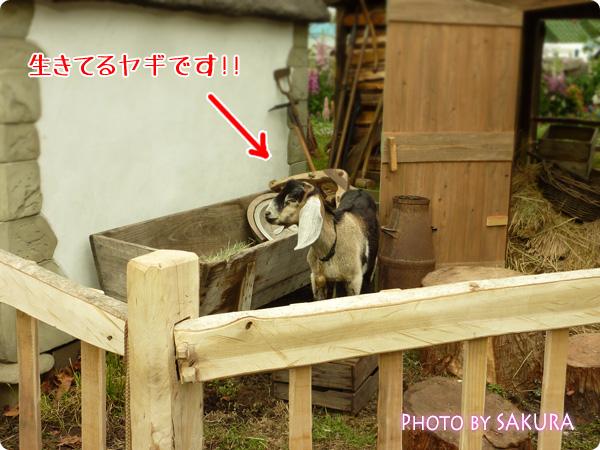 ターシャ・テューダー素足の庭 本物のヤギ