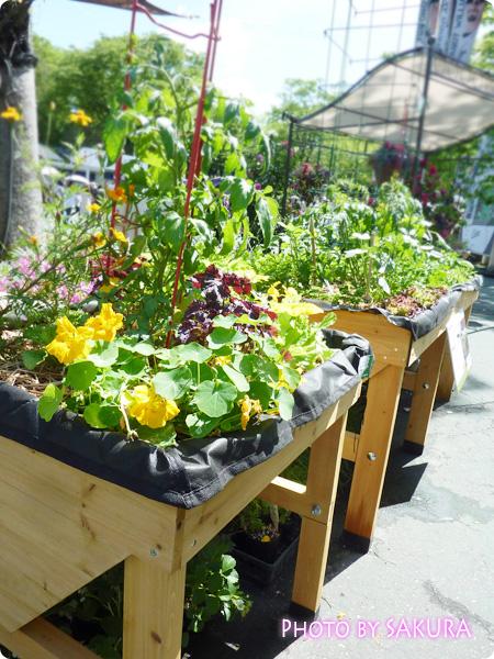 バリアフリーガーデンの庭づくり