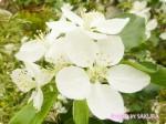 「ターシャ・テューダー素足の庭」の庭の再現がすごい!第15回 国際バラとガーデニングショウ