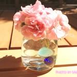 初心者さん必見!鉢植えカーネーションの花を次の年も咲かせるお手入れ方法・育て方