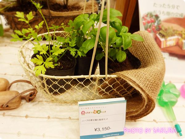 ハーブの寄せ植え栽培キット 植える前