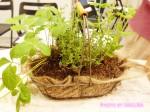 「花くらす*野菜くらす」超家庭菜園初心者でも簡単!ちょっとあると便利なハーブとスプラウトの栽培キットで食卓に彩りと健康を