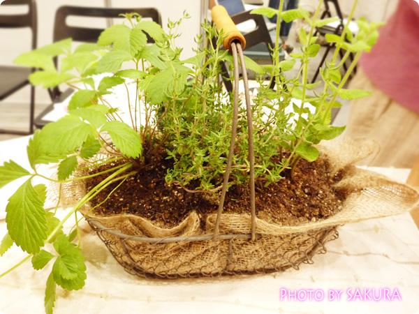 ハーブの寄せ植え栽培キット 植えたあと