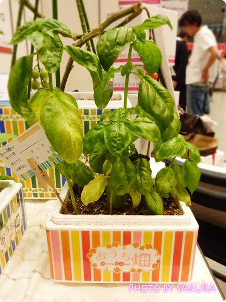 超お手軽簡単野菜キット『おうち畑』バジル