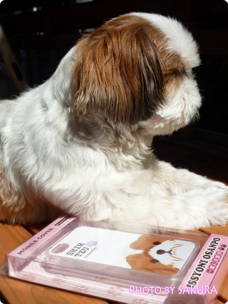 愛犬のシーズーとシーズー犬の「一緒にお散歩」iPhone4&4Sケース