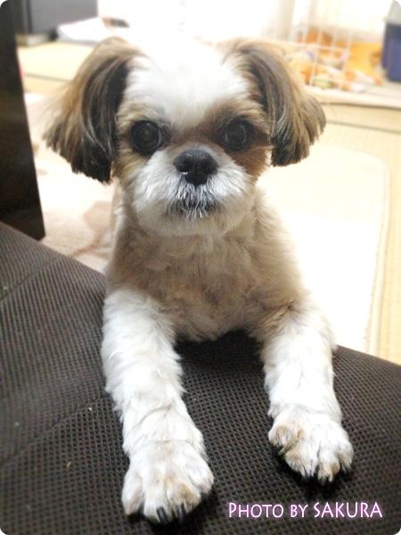 我が家の愛犬・鈴(りん)