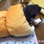 フェリシモ 夢見心地に包まれる  ふんわりビッグパンクッションの会(4回限定コレクション) チョコゴロ寝に入って読書など