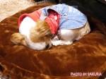 【ぺピイ】ペットのベッドを冬仕様に。ラウンドベッド専用・抗菌防臭あったか替えカバー(犬用ベッド)を購入