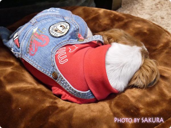 ラウンドベッド専用・抗菌防臭あったか替えカバー(犬用ベッド) 犬がすぐに寝た!!