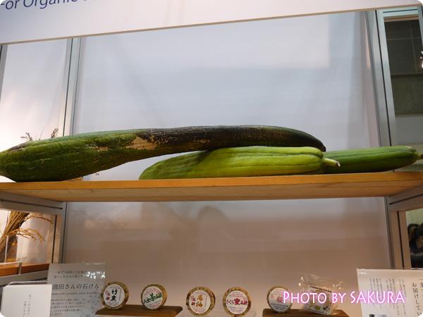 無農薬栽培の富山ヘチマ