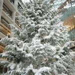 旧東京中央郵便局跡地のKITTE(キッテ)の真っ白な巨大クリスマスツリーが圧巻