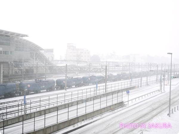 2014年2月8日大雪1
