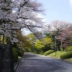 皇居乾通り春季一般公開で桜を見てきました!