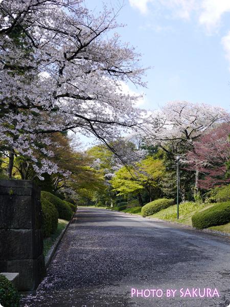 道が綺麗2