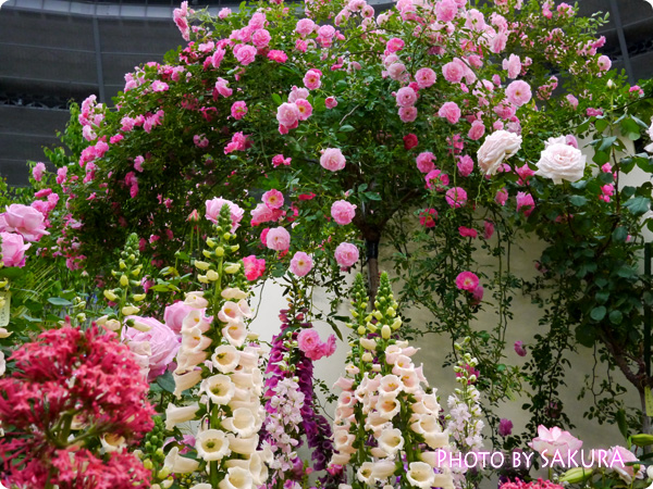 第16回国際バラとガーデニングショウ『グレース・ケリーの庭』グレース・ドゥ・モナコとジキタリス
