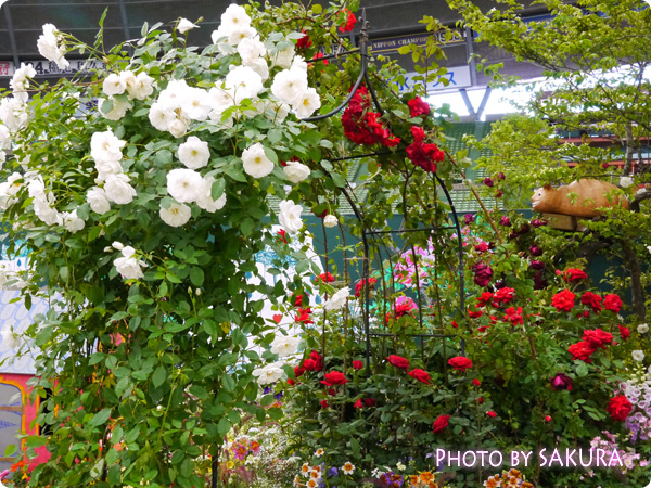 第16回国際バラとガーデニングショウ『不思議の国のアリスの庭』チュシャ猫