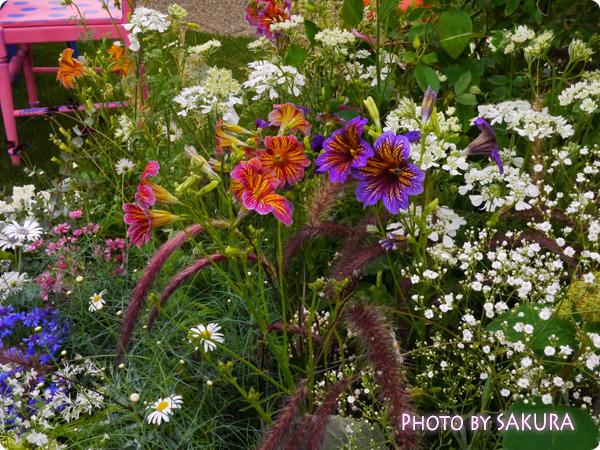 第16回国際バラとガーデニングショウ『不思議の国のアリスの庭』花アップ