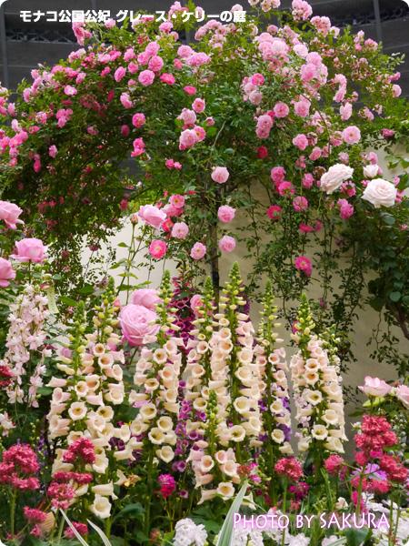 国際バラとガーデニングショウ2014 モナコ公国公妃 グレース・ケリーの庭 花アップ