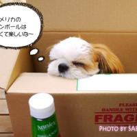iHerbアイハーブの箱の中に犬が入ってしまった・・・!