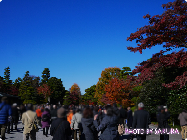 秋季皇居乾通り一般公開 乾通りの人ごみ