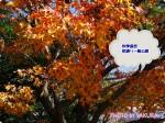 秋季皇居乾通り一般公開で紅葉を見てきました!