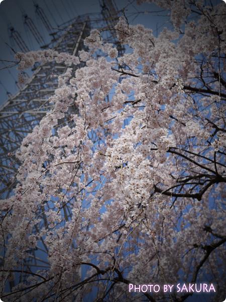 桜 LUMIX GF5 TOY F4.0 3200 -2/3 ISO-160