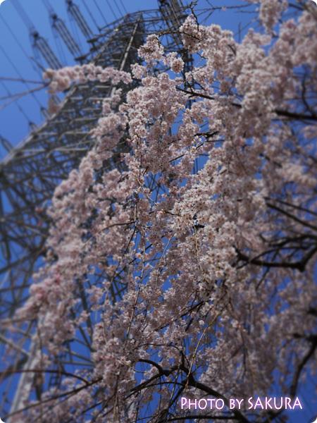 桜 LUMIX GF5 DIOR F4.0 4000 +-0 ISO-160
