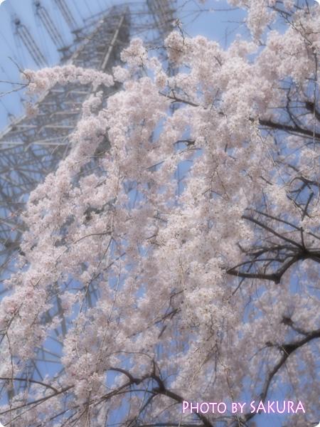 桜 LUMIX GF5 花をふんわり撮る F3.2 3200 +1 ISO-160