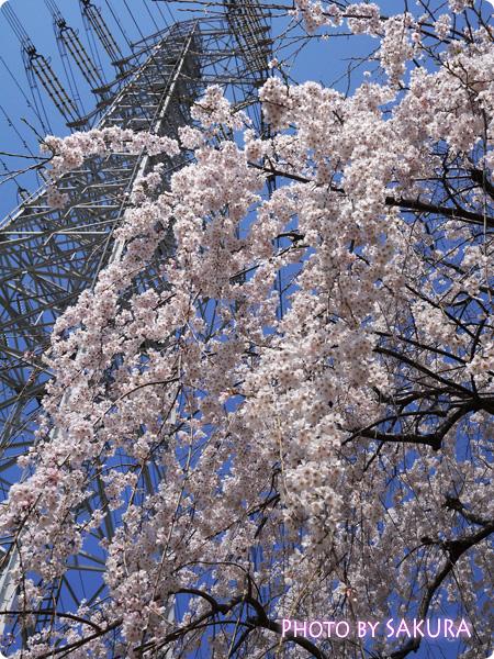桜 LUMIX GF5 風景をきれいに撮る F6.3 1600 0 ISO-160  20mm