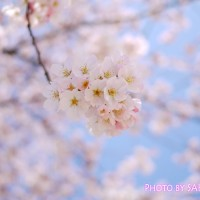 桜 LUMIX GF5 Aモード F1.7 4000 -2/3 ISO-160 20mm