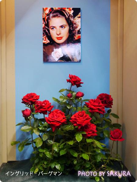 国際バラとガーデニングショウ2015 イングリッド・バーグマン