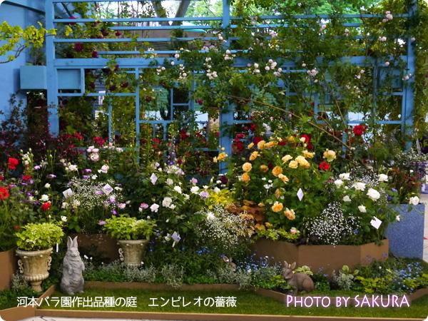 国際バラとガーデニングショウ2015 河本バラ園作出品種の庭 エンピレオの薔薇
