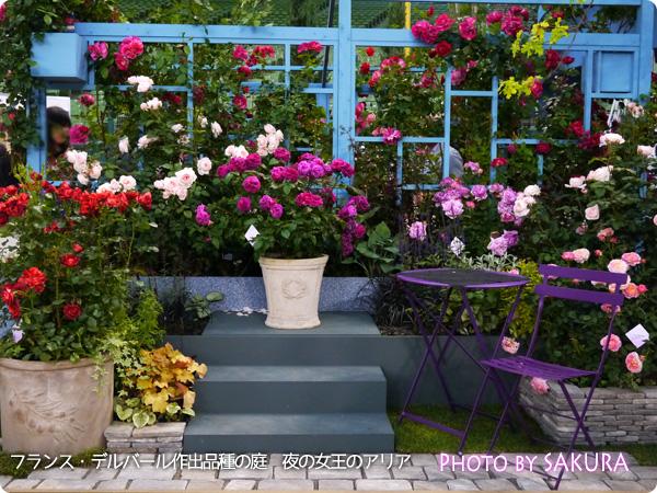 国際バラとガーデニングショウ2015 河本バラ園作出品種の庭 フランス・デルバール作出品種の庭 夜の女王のアリア