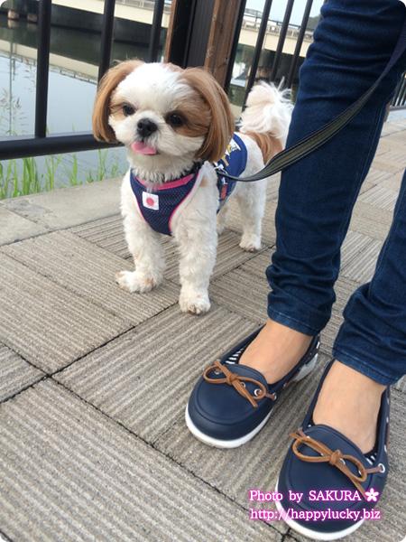 crocs クロックス beach line boat shoe w ビーチライン ボート シュー ウィメン (navy / white) 愛犬とのお散歩1