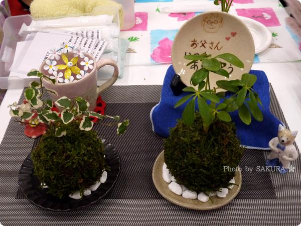 VELTRAベルトラのオプショナルツアー「季節の苔玉づくり体験」体験で作れる苔玉たち