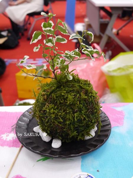 VELTRAベルトラのオプショナルツアー「季節の苔玉づくり体験」体験で作れる苔玉サンプル
