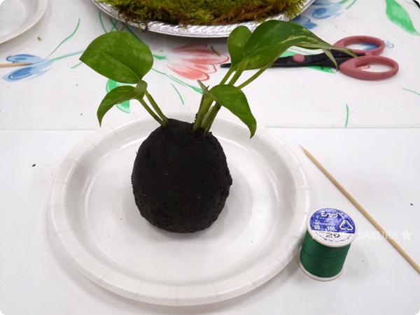 VELTRAベルトラのアクティビティ「季節の苔玉づくり体験」好きな植物を選ぶ