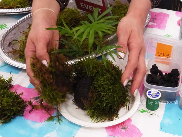 VELTRAベルトラのアクティビティ「季節の苔玉づくり体験」植物に苔をのせる