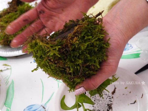 VELTRAベルトラのアクティビティ「季節の苔玉づくり体験」底にも苔をはりつける