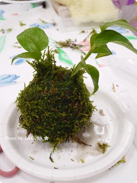 VELTRAベルトラのアクティビティ「季節の苔玉づくり体験」苔玉完成