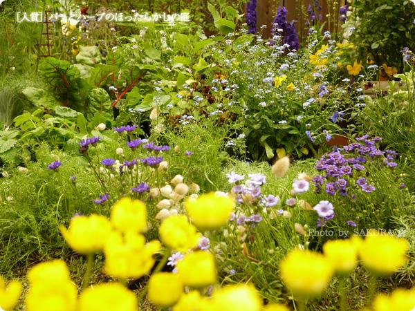 国際バラとガーデニングショウ2016 [入賞]バラとハーブのほったらかしの庭