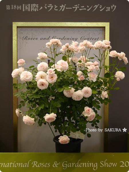国際バラとガーデニングショウ2016 [大賞]花ぼんぼり