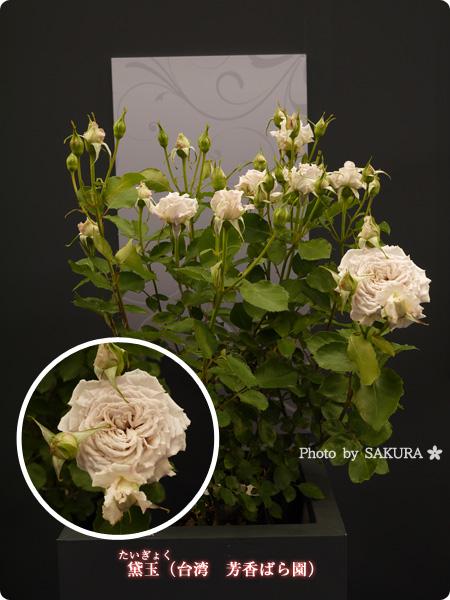 黛玉(台湾 芳香ばら園) 2016年春発表バラ最新品種ベスト10まとめ@国際バラとガーデニングショウ