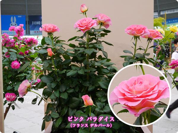 国際バラとガーデニングショウ 2017年春発表バラ最新品種ベスト10 ピンク パラダイス(フランス デルバール)