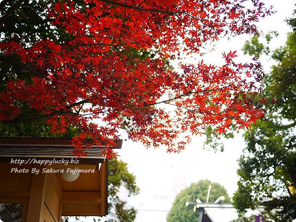 2017年12月8日 東京大神宮にて撮影した紅葉